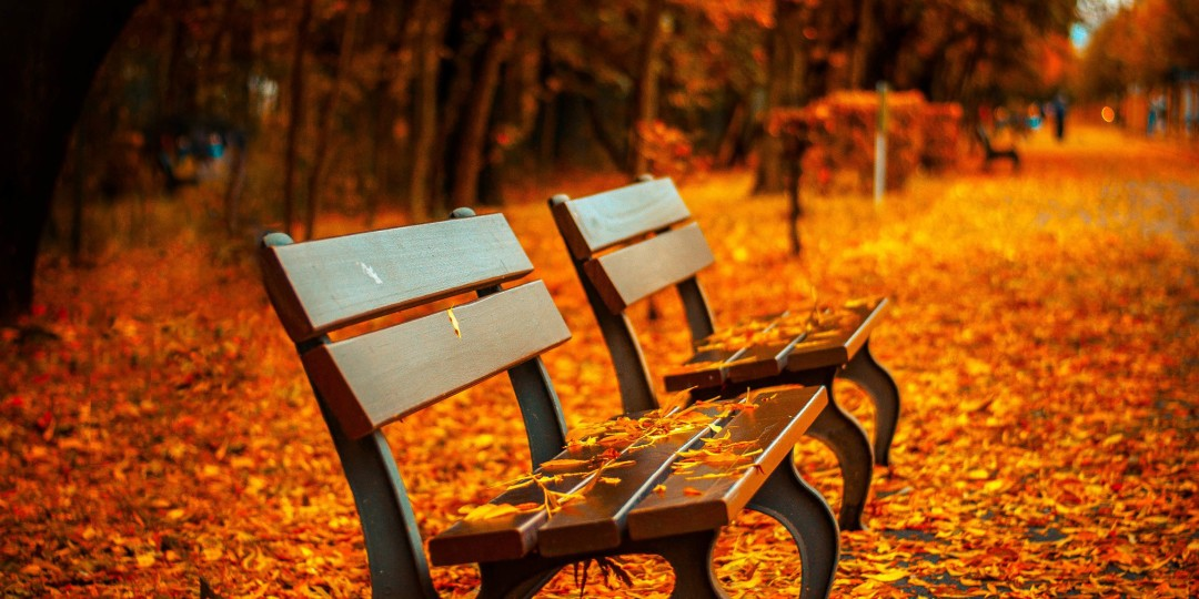 image of a bench among fall leaves