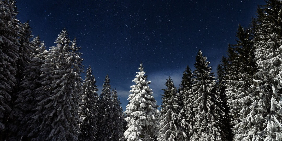 image of a forest with snowy trees